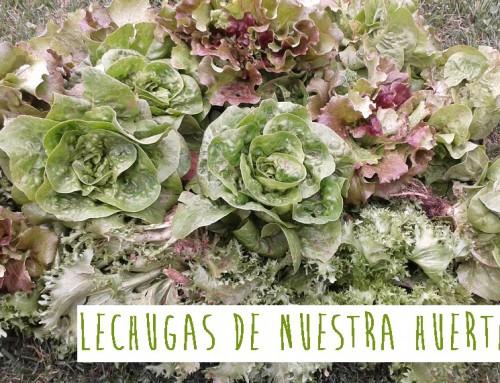 LECHUGAS DE NUESTRA HUERTA